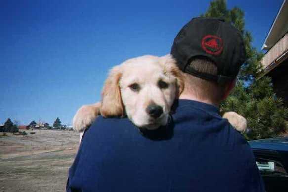 puppy-on-shoulder.jpg