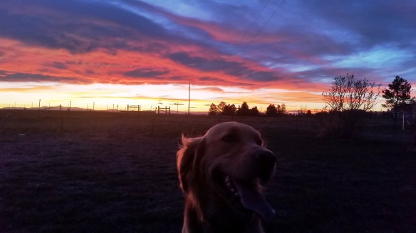 sunset with Monty 2016