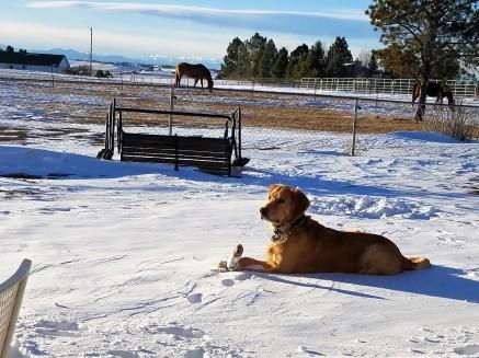 Monty in the snow 2018.jpg